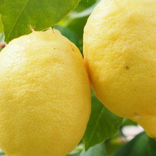 Sage Citrus