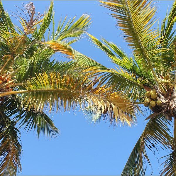 Exotic Coconut* Fragrance Oil