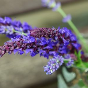 Lavender Sage Type Fragrance Oil