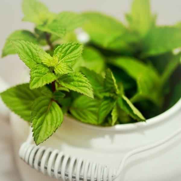 Peppermint Fragrance Oil